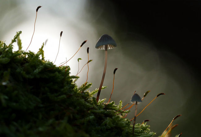 Autumn Beauty In Nature Fragility Herbst Mushroom Nature Outdoors Pilz Plant