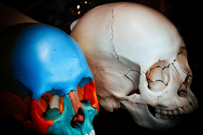 Close-up Forensic Model Fragility No People Skulls Skulls For Sale