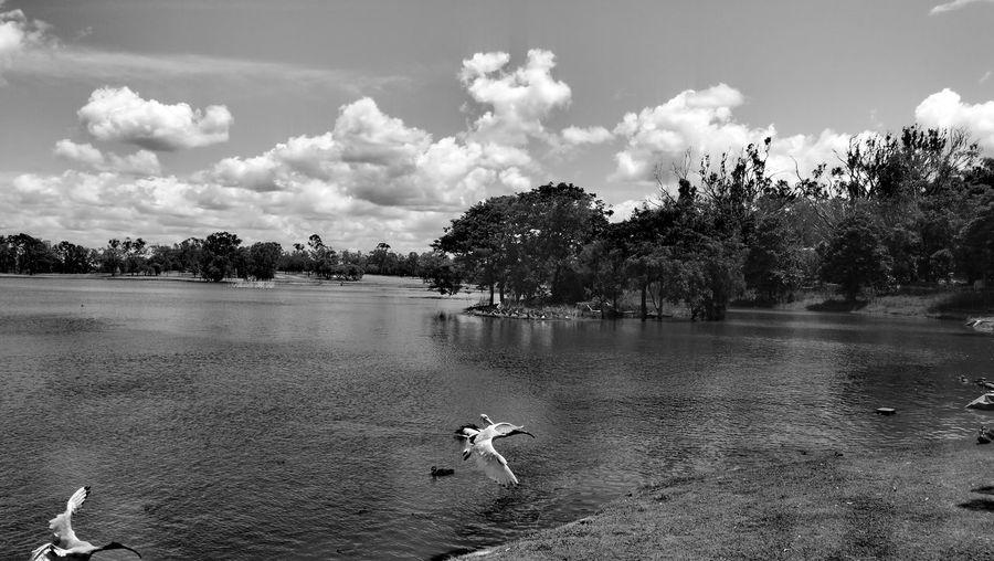 Yeppon Lagoon Black And White Friday