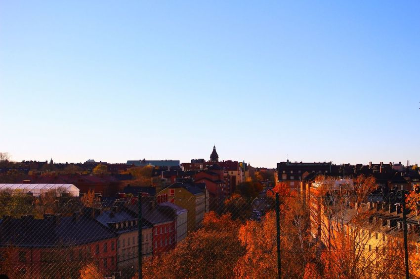 Autumdays EyeEm Gallery Stockholm, Sweden Houses Trees Town View Vasastan Autumn Colors Autumn Collection View From The Top Eyeemgallary Colorful Orange Color Stockholm.se Stockholm View