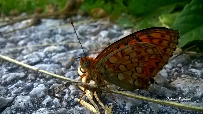 Butterfly Animal Antenna Animal Markings Animal Themes Animals In The Wild Beauty In Nature Butterfly Butterfly - Insect Close-up Day Focus On Foreground Insect Natural Pattern Nature No People One Animal Outdoors Perching Rock - Object Selective Focus Wildlife