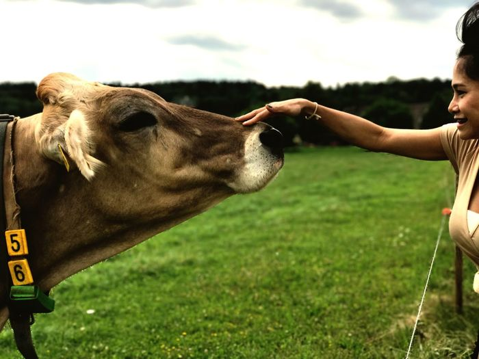 Animal Themes Domestic Animals Field Grass Mammal Human Hand One Animal Day Livestock Real People Outdoors Human Body Part Nature One Person Close-up People