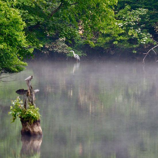 早起きして、ちょっとドライブ、、 Reflections In The Water Reflections In The Water Reflection Tree Plant Water Nature Growth No People Lake