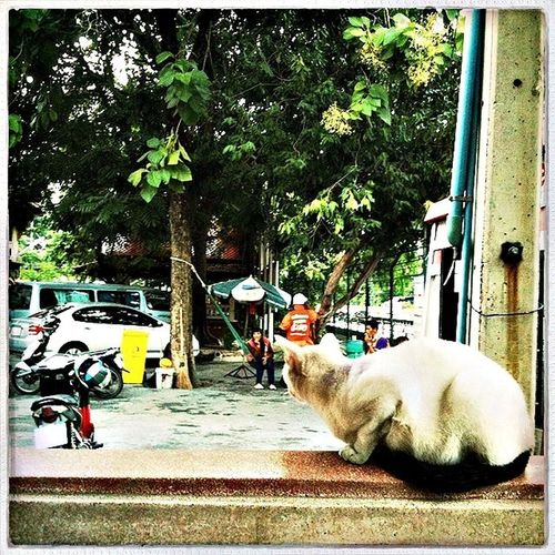 watching cat Hello World Bangkok Taking Photos Need More Space