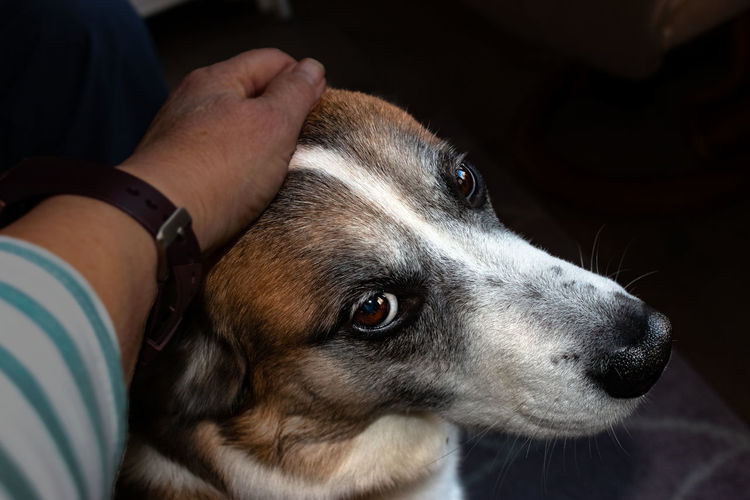 Close-up of person with dog