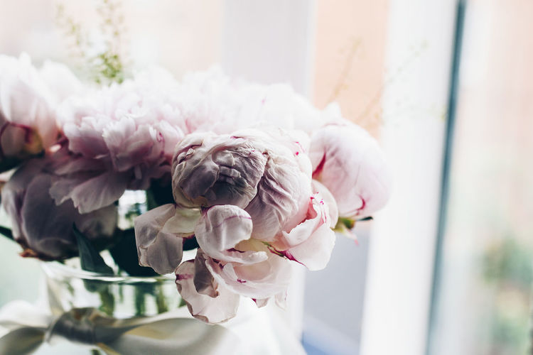 Close-up of pink flowers in vase at table