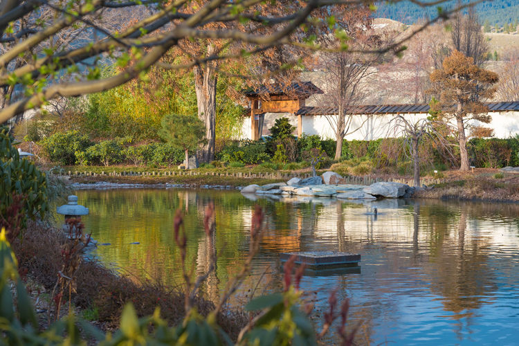 Penticton, British Columbia/Canada - March 22, 2016: the Ikeda Japanese Garden, located behind the Penticton Art Gallery, is a peaceful oasis enjoyed by locals and tourists. Beautiful British Columbia, Canada Calm Downtown Ikeda Japanese Garden Japanese Garden Penticton Art Gallery Pond Travel Trees Editorial  Evening Garden March Nature Outdoors Peaceful Reflections South Okanagan Spring Sunset Tourism Tranquil Scene Tranquility Water