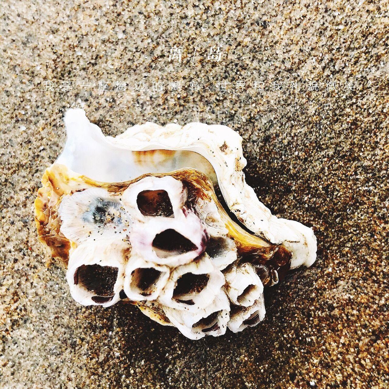 no people, close-up, day, animal bone, outdoors, beach, nature, rotting, animal themes