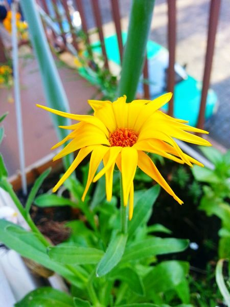 Yellow Flower Yellow Flowers Flowers Flowerporn Flower