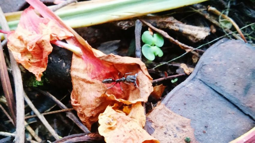 Ants Antsveiw Showcasedecember Bugs Macro_collection