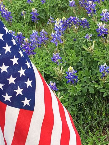 America American Flag USA USA FLAG Bluebonnets Bluebonnet Texas State Flower Texas Flower Texas Landscape Texas Wildflowers State Flower Texas Wildflower Wildflowers EyeEm Nature Lover Flower Collection EyeEm Nature Lovers Eyeem Flowers EyeEm Flower Eye4photography  Eyeemphotography IPhone Red White And Blue Backgrounds Flower Flag Growth Nature Patriotism Outdoors Beauty In Nature Close-up No People Day Freshness Flower Head