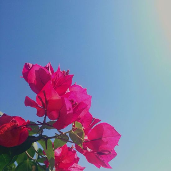 Flowers Vintage Skyporn Nature Pink Color