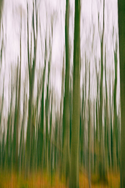 A conceptual photo using slow shutter speed of trees in a forest Agriculture Backgrounds Cereal Plant Close-up Conceptual Conceptual Art Day Freshness Full Frame Grass Green Color Growth Nature No People Outdoors Panning Panningphotography Plant Slow Slow Shutter Slow Shutter Speed Tree TreePorn Trees And Nature Treescollection