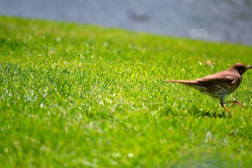 Early Bird Running Motion Green Park Life Missedit EyeEm Nature Lover EyeEm Birds Bird Photography