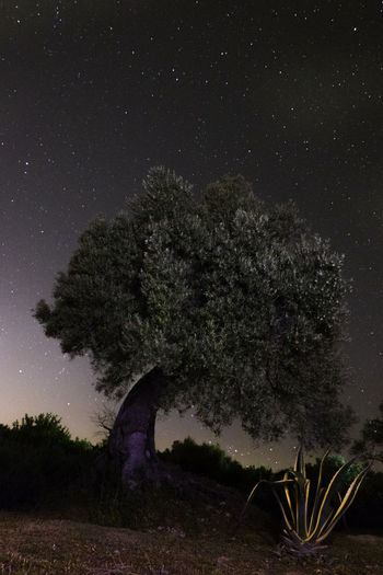 Close-up of tree against clear sky at night