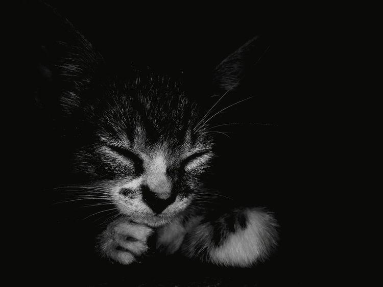 Gato! Peaceful #blackandwhite Cat Monochrome EyeEm Selects Portrait Pets