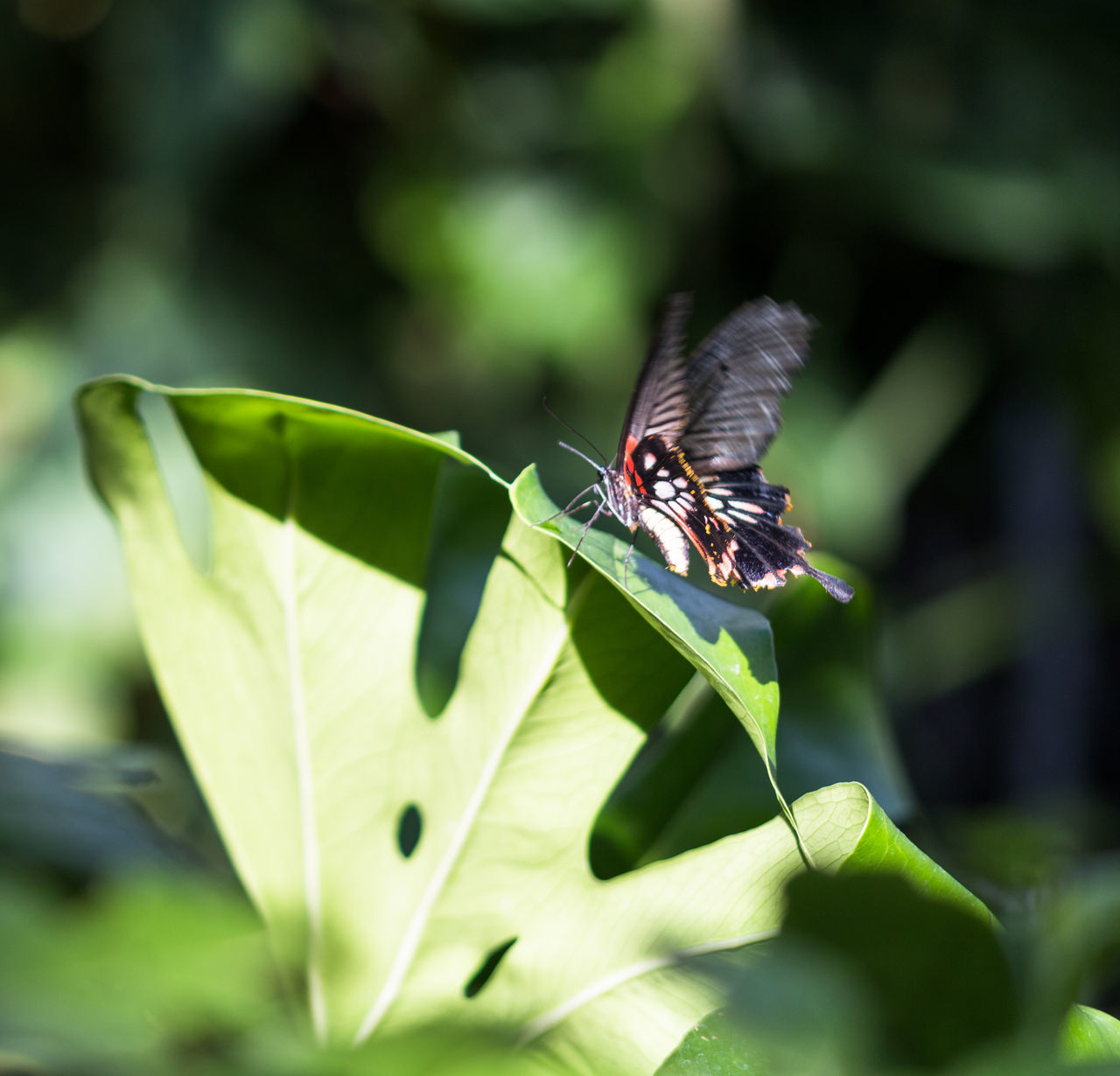 one animal, insect, animals in the wild, animal themes, green color, leaf, animal wildlife, day, close-up, outdoors, no people, nature, plant, beauty in nature, freshness