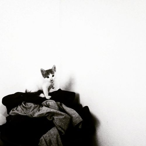 The highest point Oreokitty has ever climbed up in our house. Catsofmanila Catsofinstagram Catcare catselfie bw bnw blackandwhite paws adoptedcat