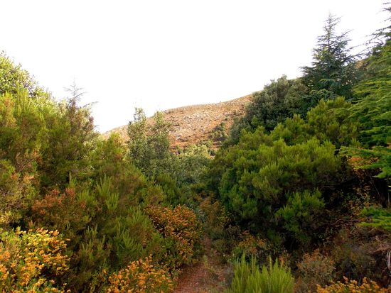 climbing monte linas with family Beauty In Nature Clear Sky Day Footpath Green Green Color Greenery Growth Lush Foliage Mountain Nature No People Non-urban Scene Outdoors Plant Remote Scenics Sky Solitude The Way Forward Tranquil Scene Tranquility Tree Valley WoodLand