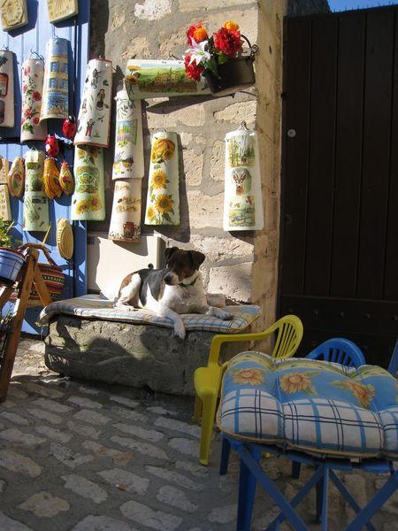 Dog Les Baux De Provence France Pastel Power