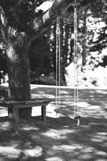 Black & White Empty Nature Park Sunlight Swing Tree Tree Trunk Wedding Photography