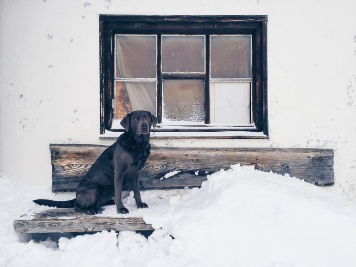 Black labrador retriever sitting on snow covered bench against house