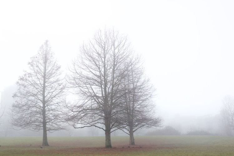 Tree Fog Environment Landscape Sky Nature Plant Tranquility Bare Tree Tranquil Scene Scenics - Nature Land Day Grass Outdoors