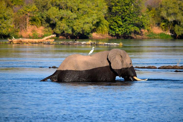 Elephant enjoying in water