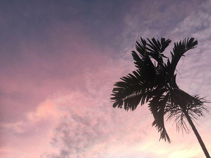 Pink Sky. Sky