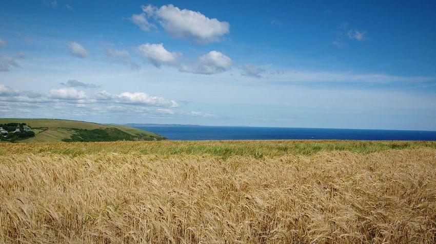 Coastal Path Cornish Coast Blue Sky Blue Sea Yellow and Green Fields Cotton Wool Clouds Summer on the South Coast
