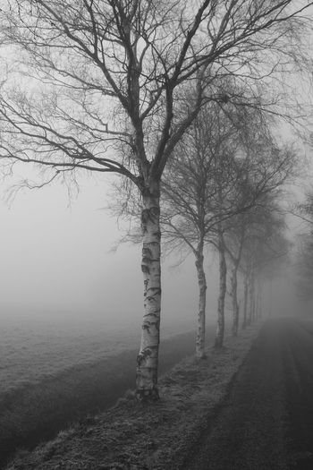 Bare Tree Beauty In Nature Black And White Black And White Photography Branch Cold Temperature Day Fog Foggy Hazy  Landscape Mist Nature No People Outdoors Scenics Tranquil Scene Tranquility Tree Tree Trunk Winter Ghostly Spooky Spooky Atmosphere Spooky Trees