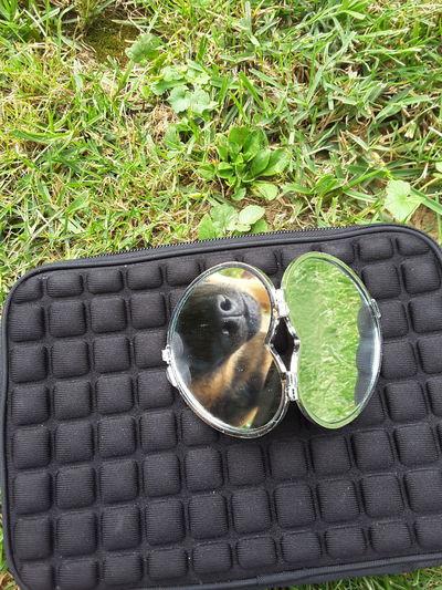 Mirror Dog Case