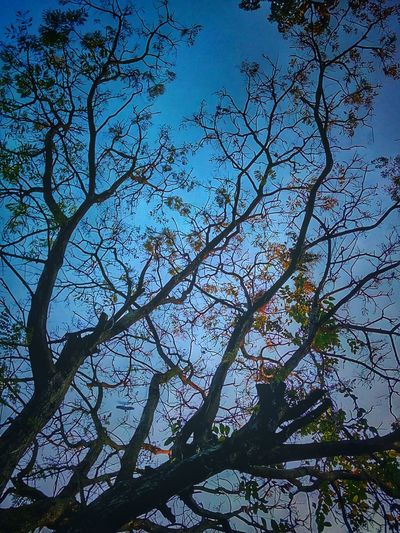 Tree Tree Photography Tree_collection  Nature Nature Photography Nature Collection Nature Color Tree Colors Color Of Tree Color Of Nature Colorful Nature Colorful Tree Beauty Of Nature Beauty Of Tree Beautiful Nature Beautiful Tree