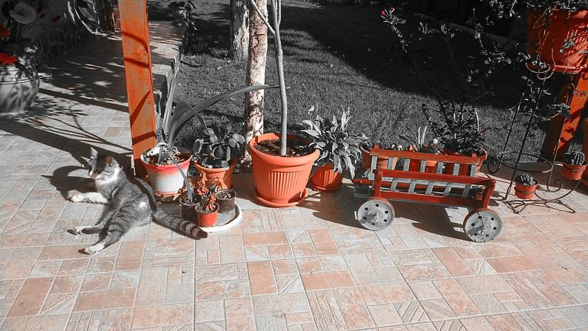 Cat♡ Front Or Back Yard Green Green Color Growth High Angle View Leaf Plant Potted Plant Recreational Pursuit Colorsplash Splash Pattern Pieces Pastel Power Evrything In Its Place
