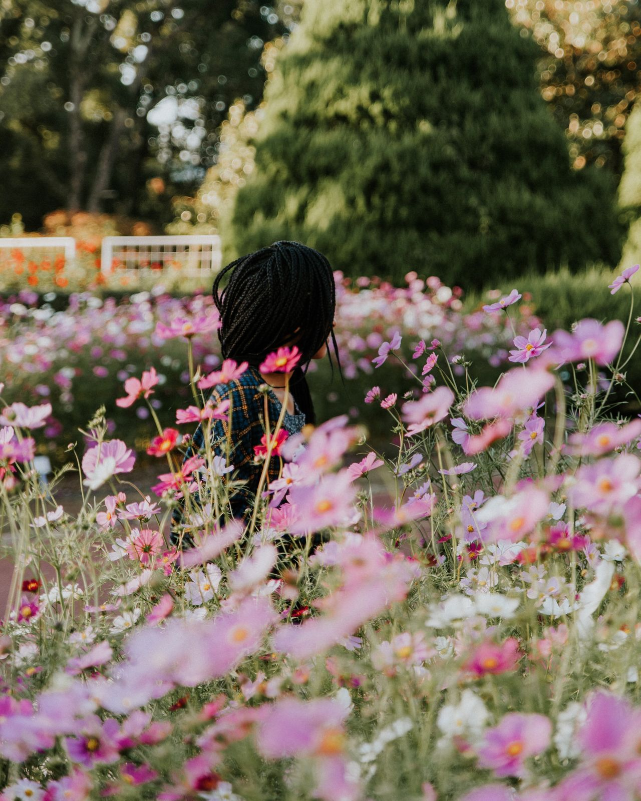 Woman sitting amidst pink flowers blooming on field in park