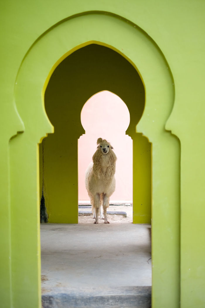 CAT LOOKING THROUGH GREEN WALL