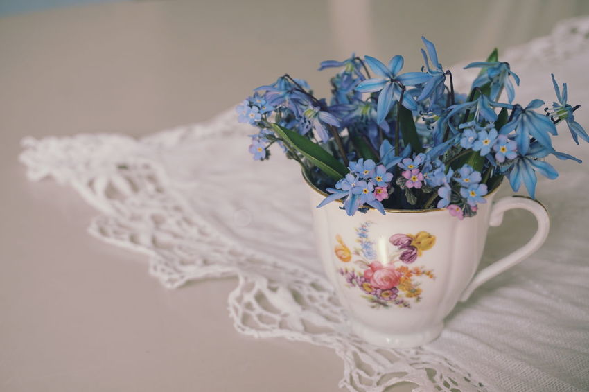 forget me not and scillas bouquet Copy Space Mother's Day Cup Vase Bouquet Bouquet Of Flowers Spring Springtime Spring Flowers White Background Flower Pastel Colored Wool Close-up Plant Petal In Bloom Light Blue Flower Head Flower Arrangement Bouquet Bunch Of Flowers Blooming Plant Life