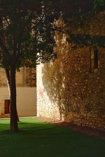 Tree Grass Lawn Nature Outdoors No People Growth Day Beauty In Nature Wall Wall - Building Feature Old Buildings Tranquility Tranquil Scene Light And Shadow Shadows & Lights