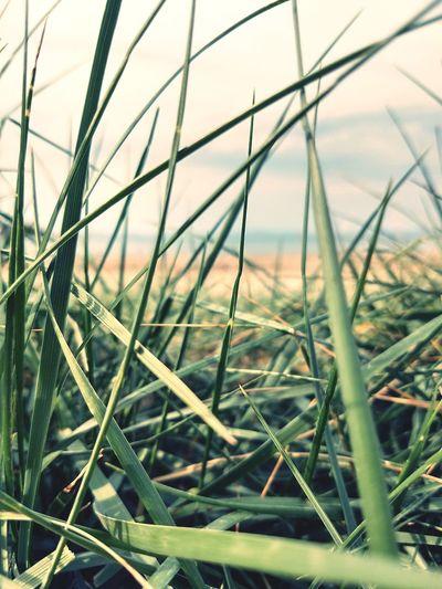 Grass is Always