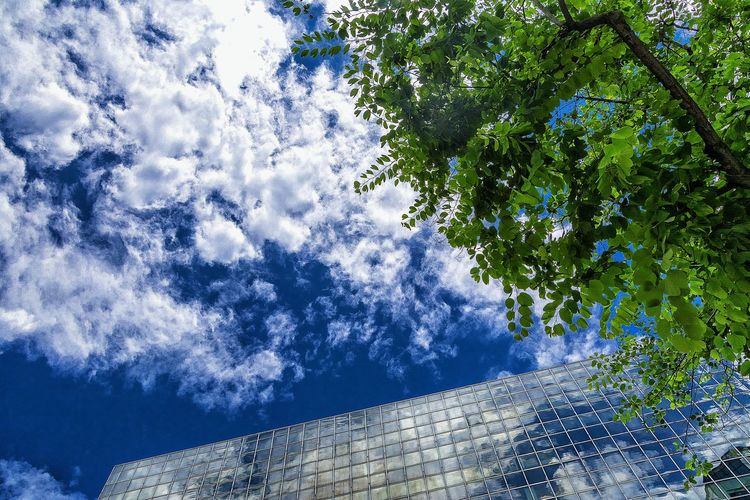 Low Angle View Day Tree Sunlight No People Nature Outdoors Growth Sky Blue Shadow Backgrounds Branch Beauty In Nature Close-up Men Vs Nature Clouds And Sky Cloud Formations Shape And Pattern Master Class EyeEm Gallery Exceptional Photographs Mood Captures Mirror Reflection Mirror