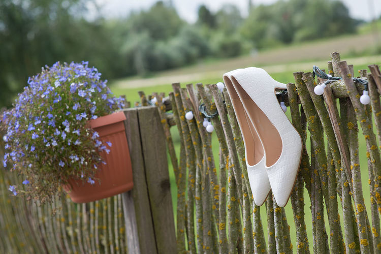 wedding background with flowers on wooden fence Baltic Beuty Blue Blue Flower Bride Close-up Details Details Of My Life Flower Pot Latvia Love Nature Outdoors Wedding Wedding Around The World White Shoes Wooden Fence