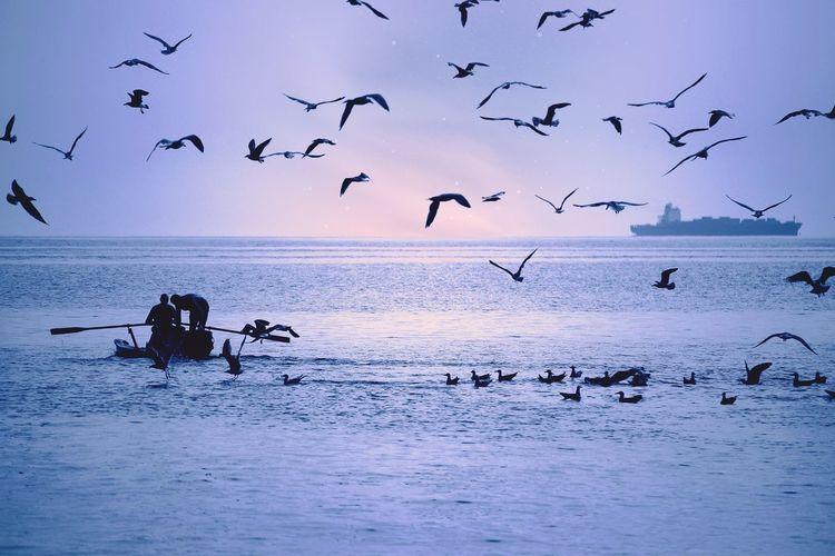 Silhouette birds flying over sea against sky