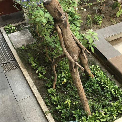 Homem arvore Growth Plant Outdoors Tree Day Front Or Back Yard No People Nature Tree Trunk