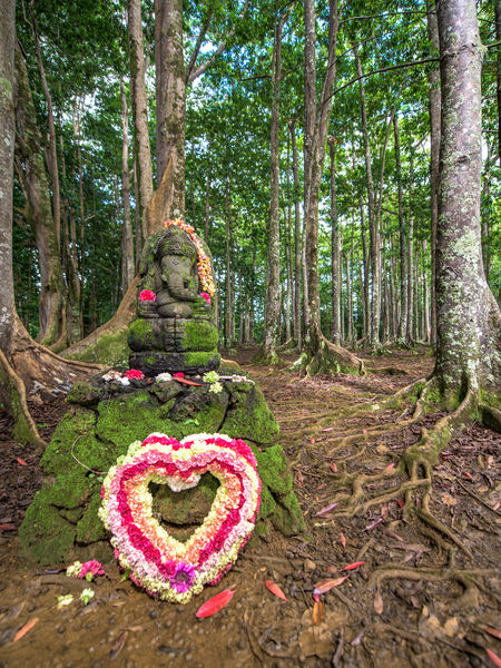 There is a Hindu monastery and sacred rudraksha forest on Kauai island. In between the beautiful rudraksha trees you can find a revered statue of the Hindu god Ganesh. Elephant Forest Ganesha God Hawaii Heart Hindu Holy Indian Kauai Leaves Love Nature No People Outdoors Root Rudraksha Sacred Sculpture Tree USA