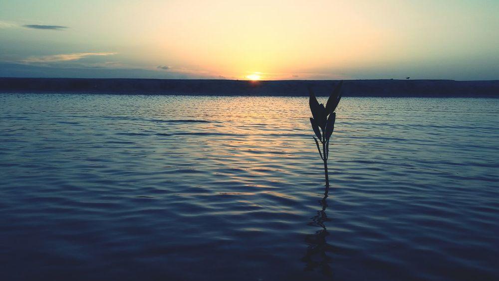 Utila, Honduras and its beautiful Nature. Utila ♡ Honduras ♥ Nature Photography First Eyeem Photo