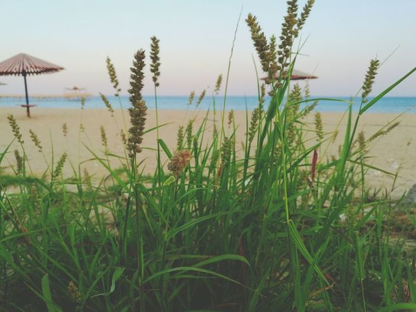 Beauty lies in hidden details. ❤ Sea Weeds Sea Weedplants Sea Weed And Sand Grass Plant Green Color Sand Beach Nature Beauty In Nature Horizon Over Water Sky Day No People Outdoors Vacations Finding New Frontiers