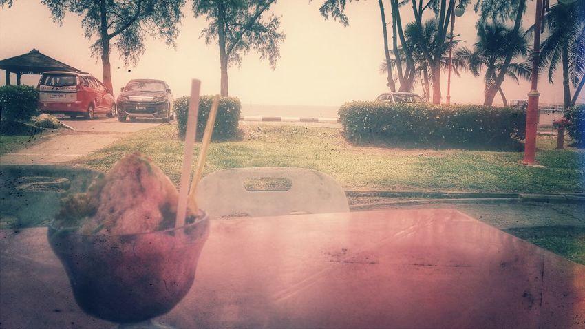 ABC Beachlife Palm Tree Outdoors
