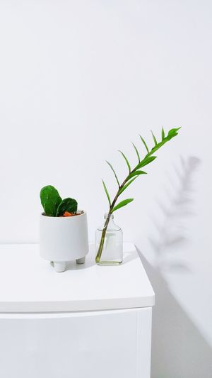 Close-up of potted plant on table