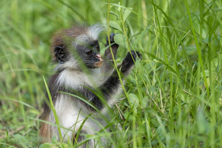 Monkey in a field