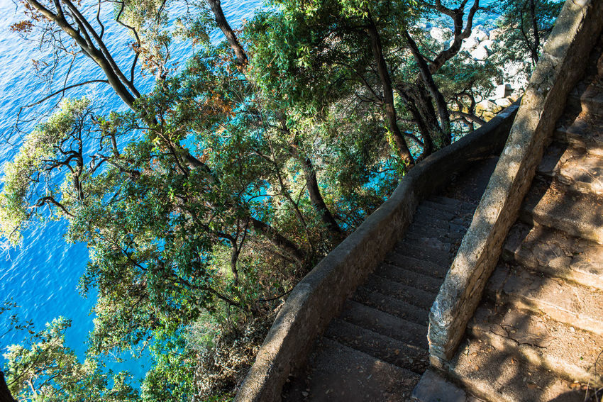 Portofino Natural Regional Park Portofino Promontory Stairs Adventure Beauty In Nature Branch Cliff Climbing Day Forest Freshness Growth Liguria Nature No People Outdoors Scenics Sea Staircase Sunlight Tourism Travel Destinations Tree Water